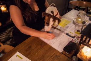 Letter Writing Marathon dog