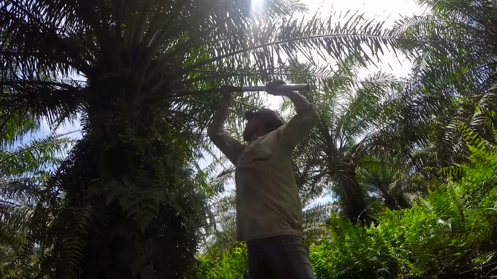 Palm Oil and human rights: What you need to know
