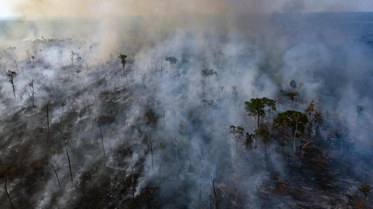 Brazil: Halt illegal cattle farms fuelling Amazon rainforest destruction